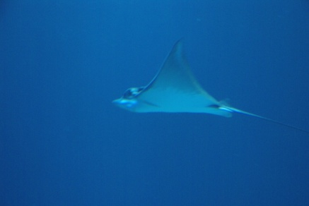 Ozeaneum